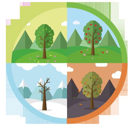 Baum Jahreszeiten PNG - 48193