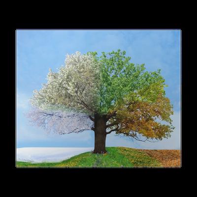 Baum Vier Jahreszeiten PNG-PlusPNG.com-400 - Baum Vier Jahreszeiten PNG