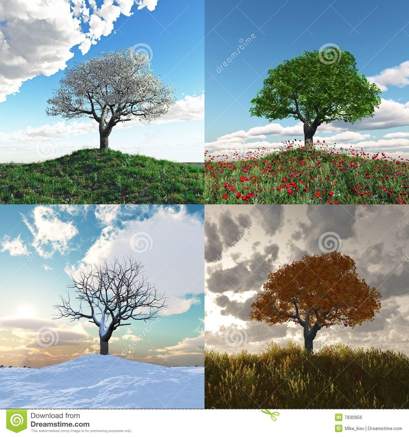 Einsamer Baum Bei Zeitspanne Mit Vier Jahreszeiten - Wählen Sie aus über 59  Million qualitativ hochwertigen - Baum Vier Jahreszeiten PNG