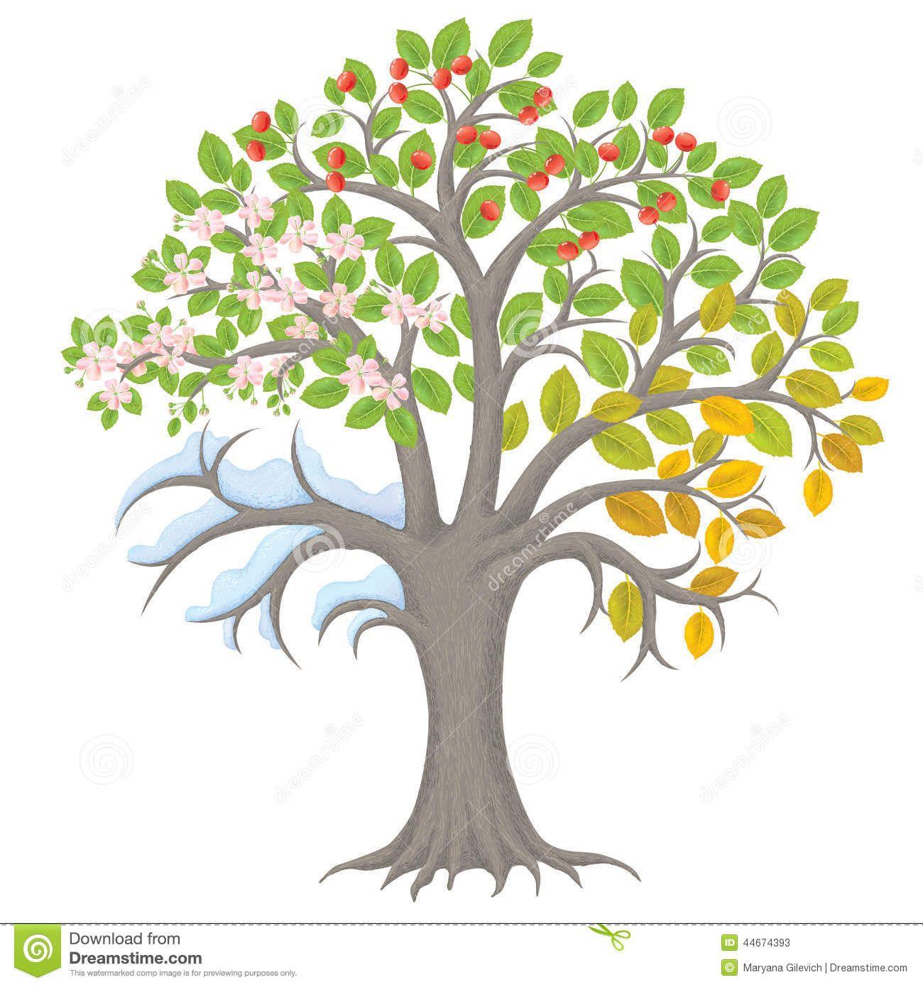 Baum Vier Jahreszeiten PNG - 163260