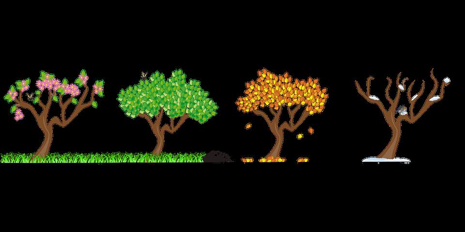 jahreszeiten vier jahreszeiten baum natur herbst - Baum Vier Jahreszeiten PNG
