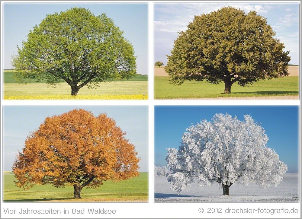 Baum Vier Jahreszeiten PNG