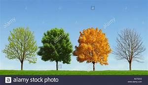 tree 4 seasons baum 4 jahreszeiten stock photo royalty - Baum Vier Jahreszeiten PNG