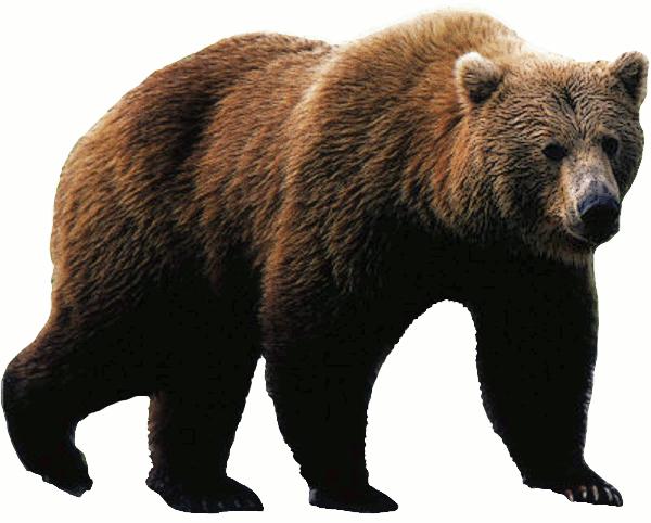 Bear clip art download page 9 - Bear HD PNG