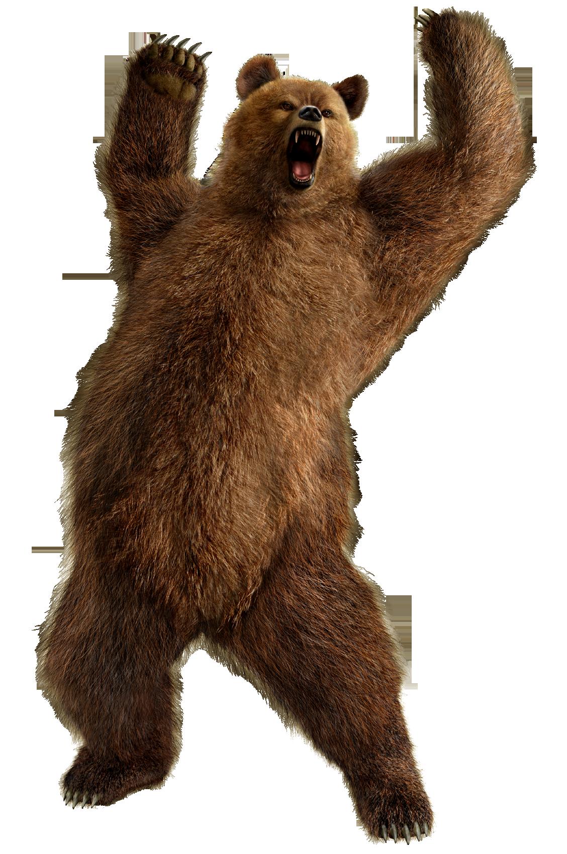 Bear Png 3 PNG Image - Bear HD PNG