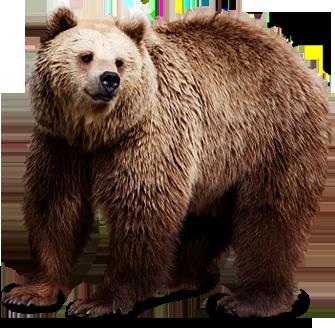 Bear PNG Image - Bear HD PNG