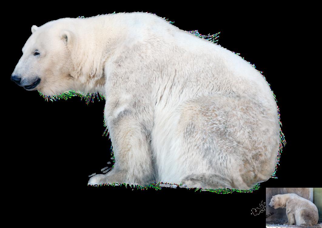 Polar Bear PNG File - Bear HD PNG