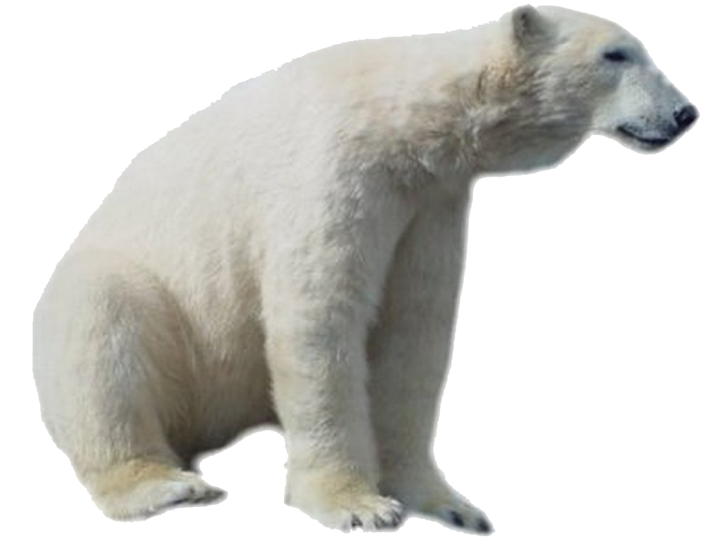 Bear HD PNG