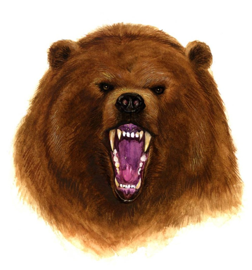 angry bear png