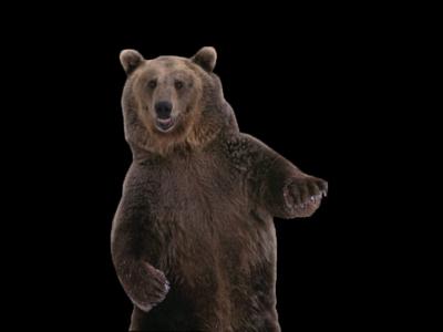 Bear Png 11 PNG Image