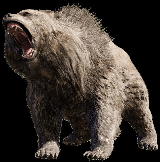 bear PNG - Bear PNG