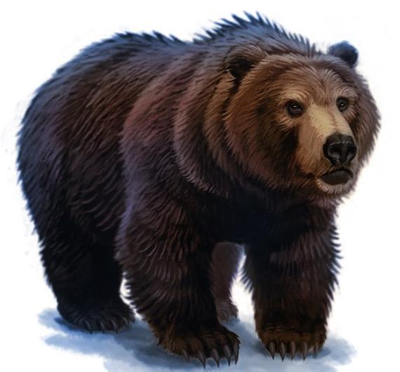 Bear.png - Bear PNG