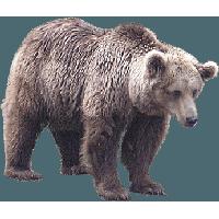Bear Png Image PNG Image