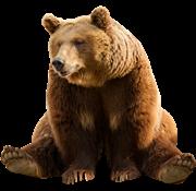 Bear PNG - 13187