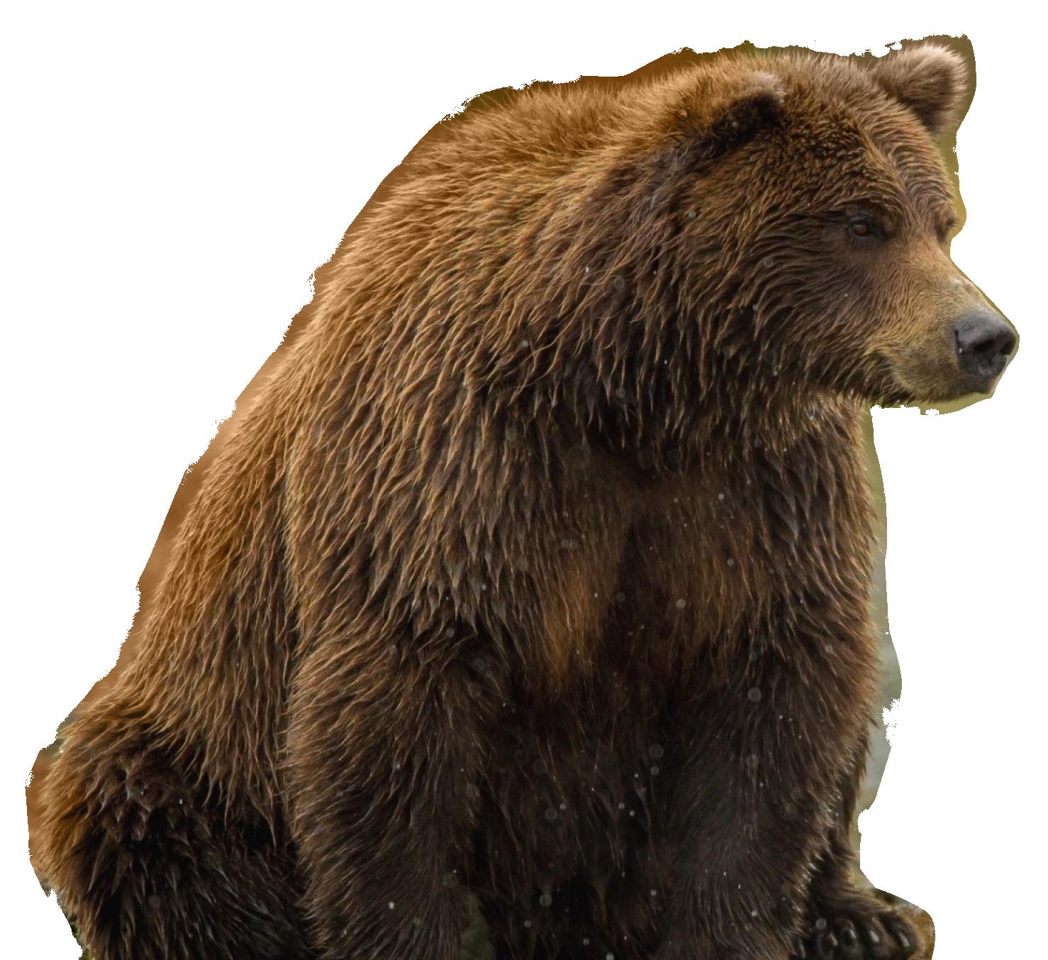 Bear PNG - 13185