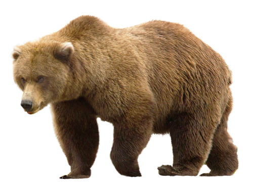 Bear PNG Images On this site
