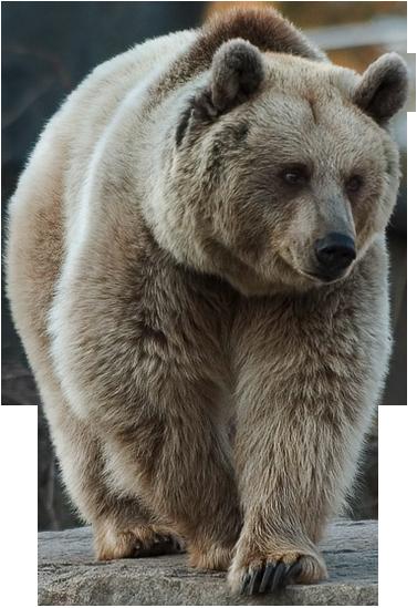 Brown Bear by LOVEMAYU on Dev