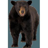 Bear PNG - 13189