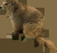 Beaver PNG - 27641