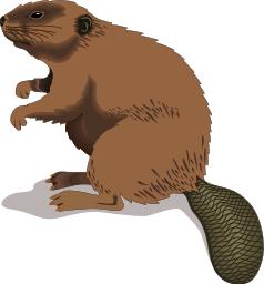 Beaver PNG - 27636