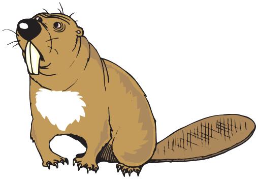 Beaver PNG - 27634