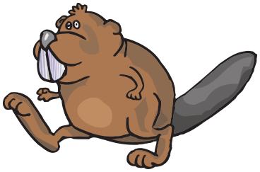 Beaver PNG - 27639