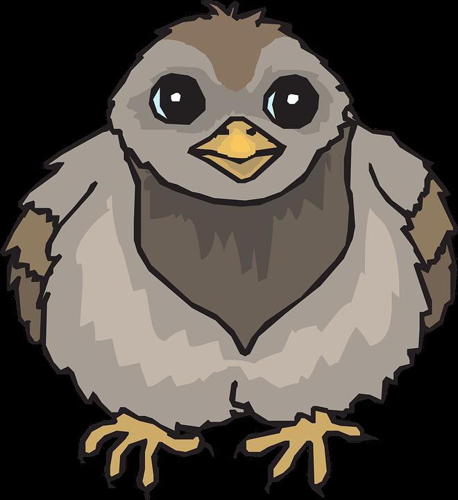 Bébé, Oiseau, Ailes, Pigeon, Floue - Bebe Oiseau PNG