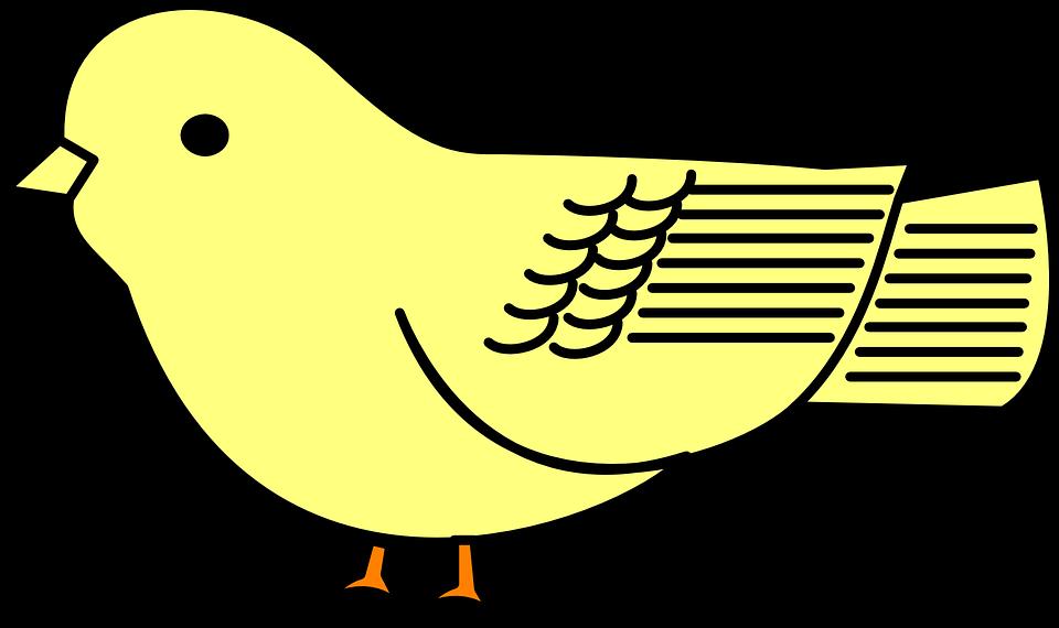 Bébé, Oiseau, Jaune, Poussin - Bebe Oiseau PNG
