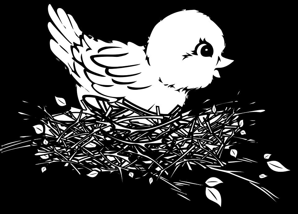 Bébé, Oiseau, Poussin, Nid - Bebe Oiseau PNG