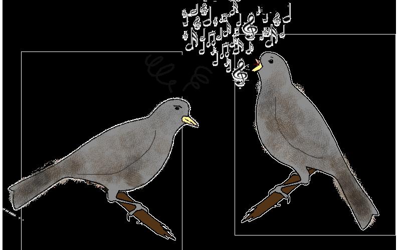 Importance de lu0027apprentissage social pour le chant - Bebe Oiseau PNG