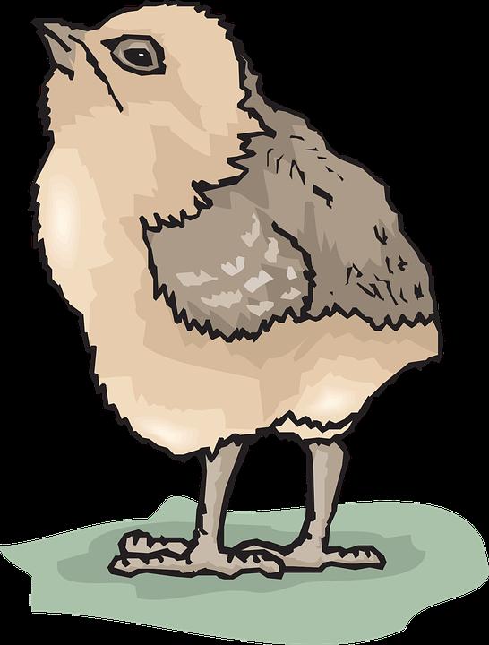 Bebe Oiseau PNG