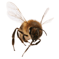 Bee Png Image PNG Image - Bee Free PNG