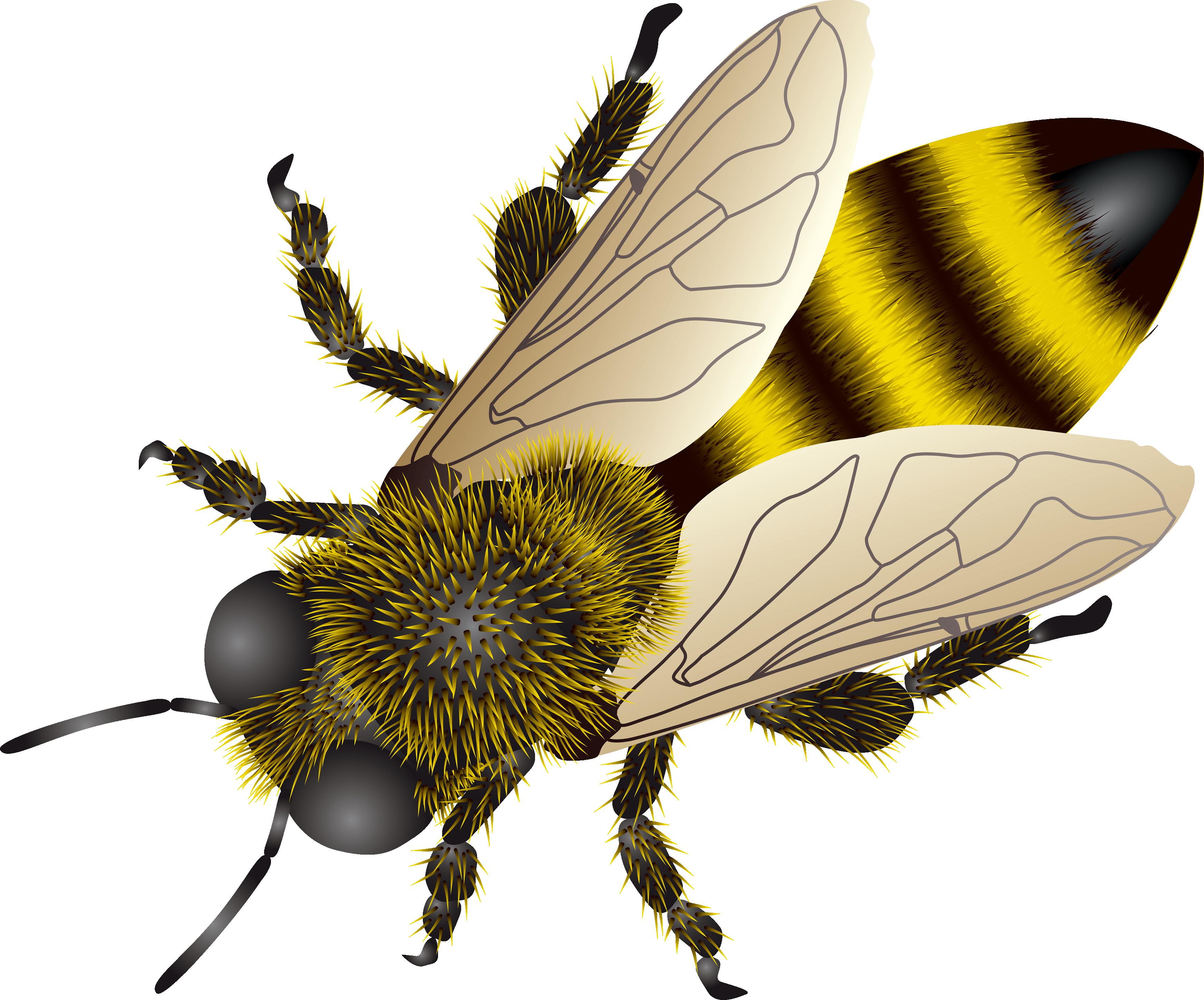 Bee HD PNG - 89222
