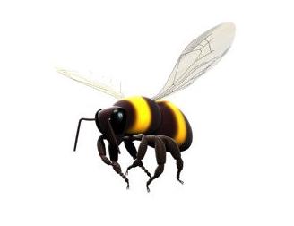 Bee PNG - 9132