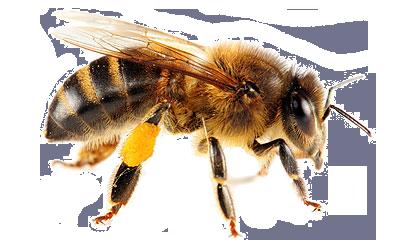 Bee PNG - 9113