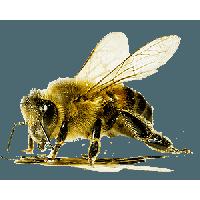 Bee PNG - 9123