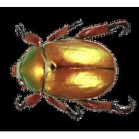 Beetle Free Png Image PNG Image - BeeBeetle PNG