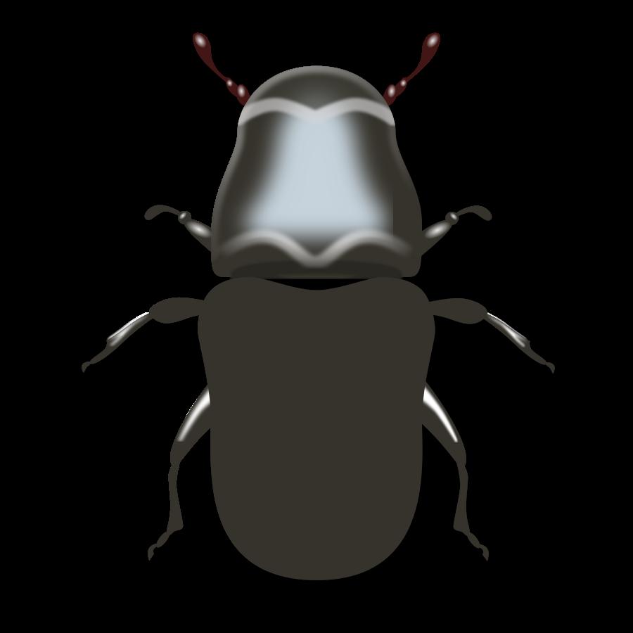 Pine Beetle Clip art - BeeBeetle PNG