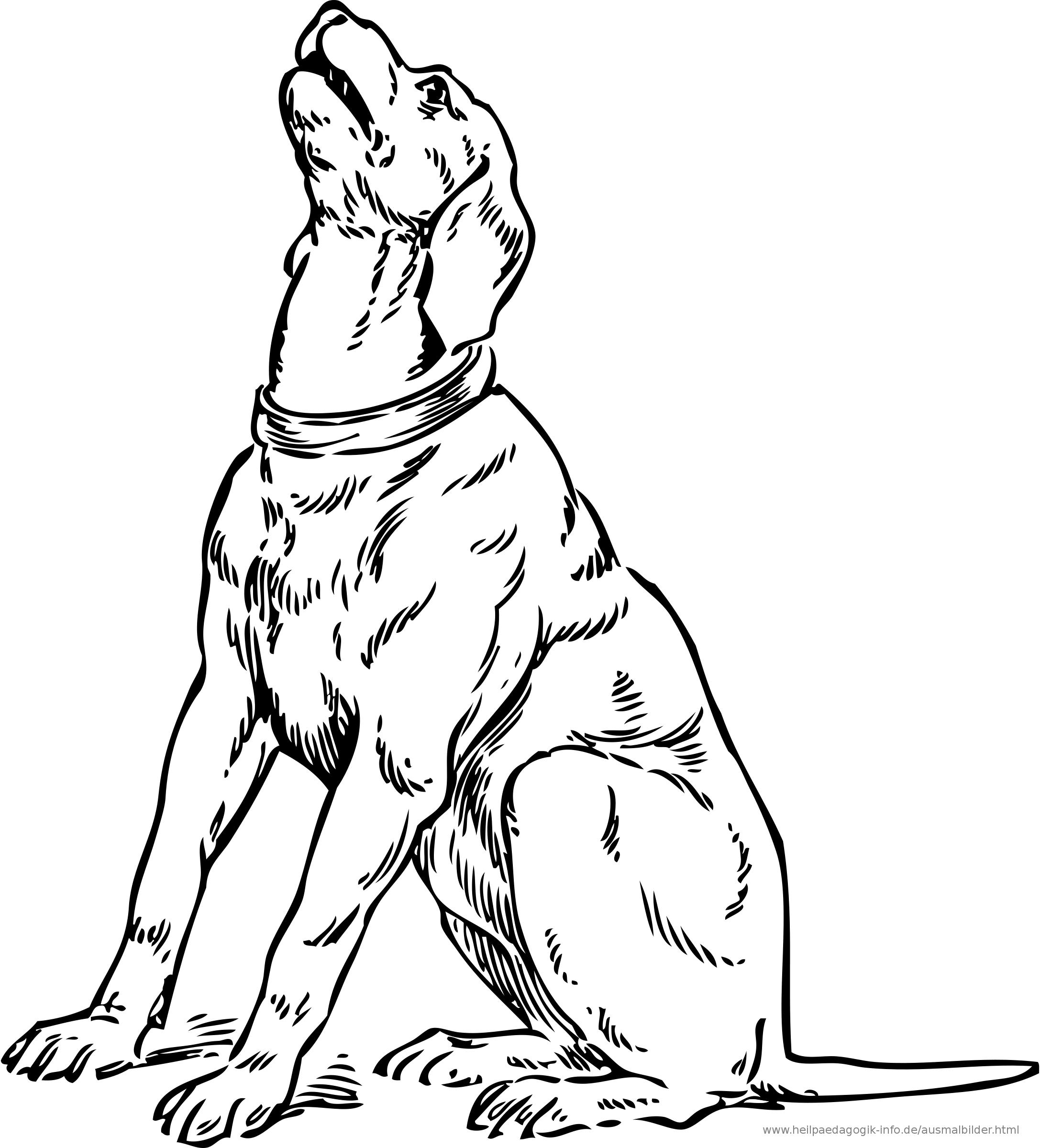 Bellender Hund PNG-PlusPNG.com-2174 - Bellender Hund PNG