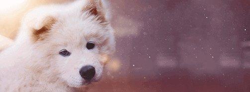Traumdeutung Hund - Bellender Hund PNG