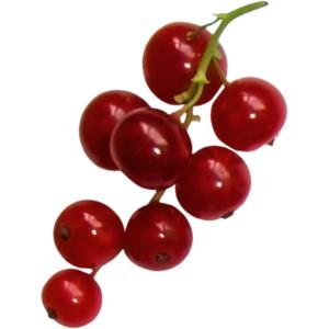 CR_ASTIC Berries 1.png - Berries PNG
