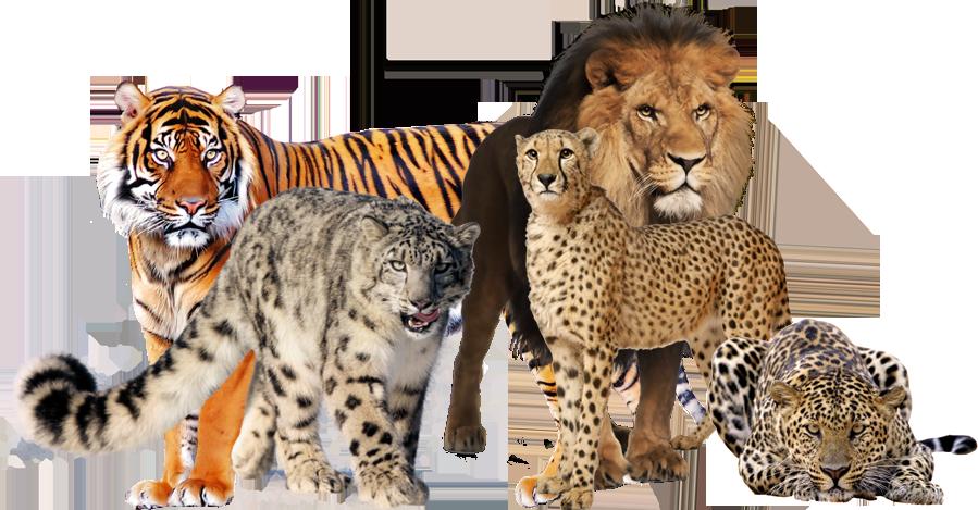 Big Cats by Vesperius PlusPng.com  - Big Cat PNG