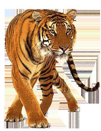 Big Cat PNG - 144235