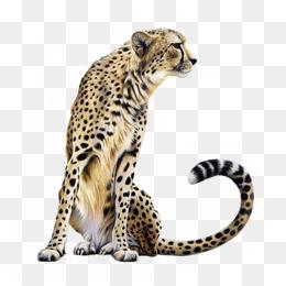 Big Cat PNG - 144230