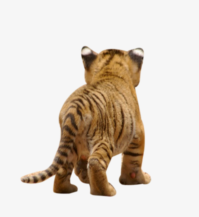 Little Tiger back, Tail, Go Away, Big Cat PNG Image and Clipart - Big Cat PNG