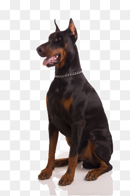 Big Dog PNG HD