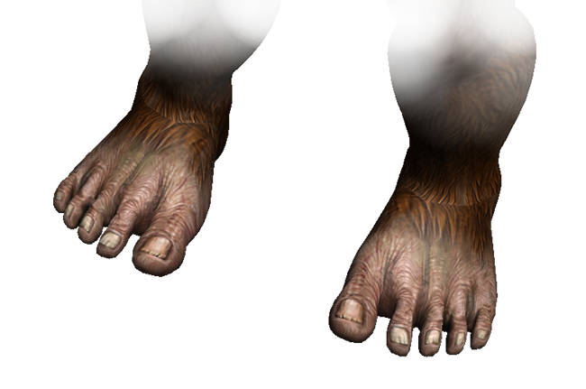 A Sasquatch canu0027t be a Sasquatch without the feet! - Big Toe PNG