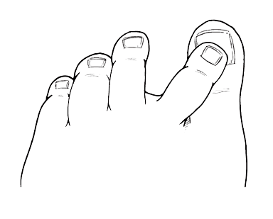 Big Toe PNG - 60075