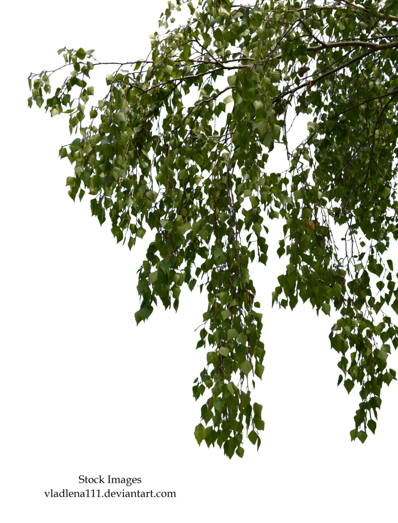 Branch PNG Transparent Branch.PNG Images. | PlusPNG