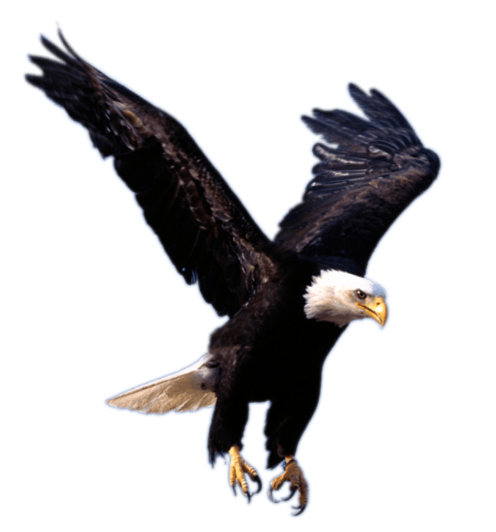 Eagle Landing - Bird Claw PNG